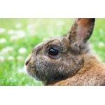 Kaninchen / Nager